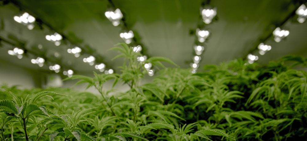 best grow boxes